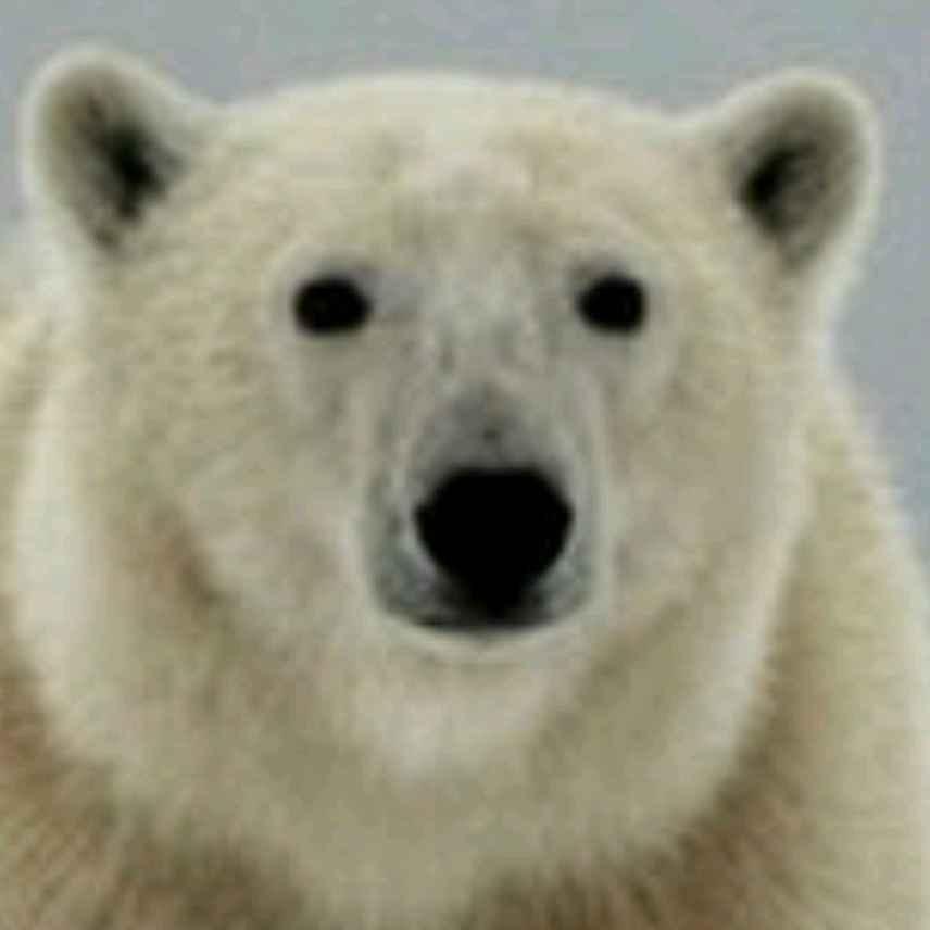 Smlarf avatar